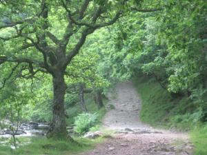 Bridlway in the Doone Valley. North Devon