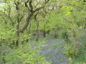 Woodland on the Granite Way, Okehampton, Devon