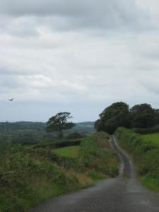 The lanes leading away from my house. Note the buzzard, captured by accident.