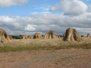 Old school haystacks