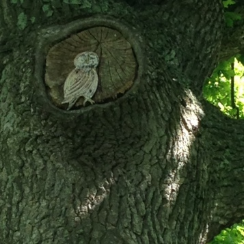 owlcarving